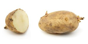 Russet_potato_cultivar_with_sprouts