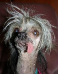 ugly dog 1
