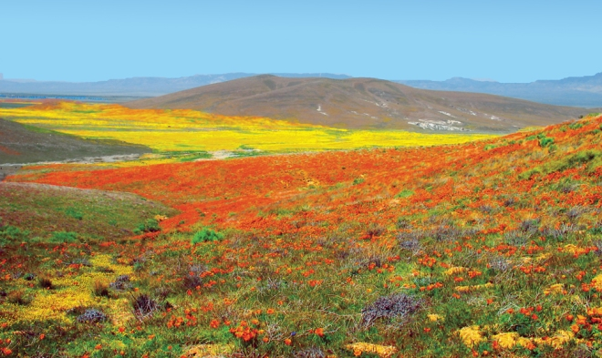 Antelope_Valley_Poppy_Preserve