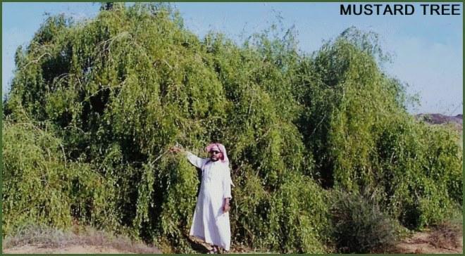 MUSTARD+TREE